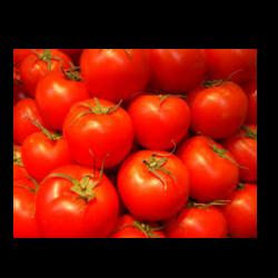 Plateau tomates rondes