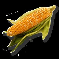 Poupée maïs