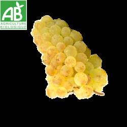 raisin chasselas