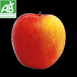 Pomme Delbart nouvelle récolte